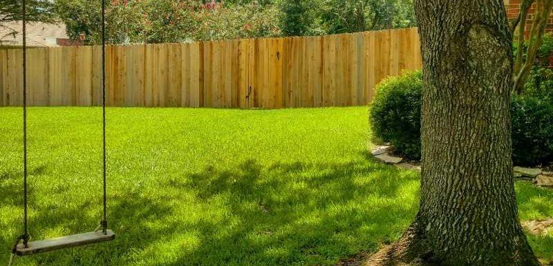 Will Grass Grow in Shade - Houston Grass