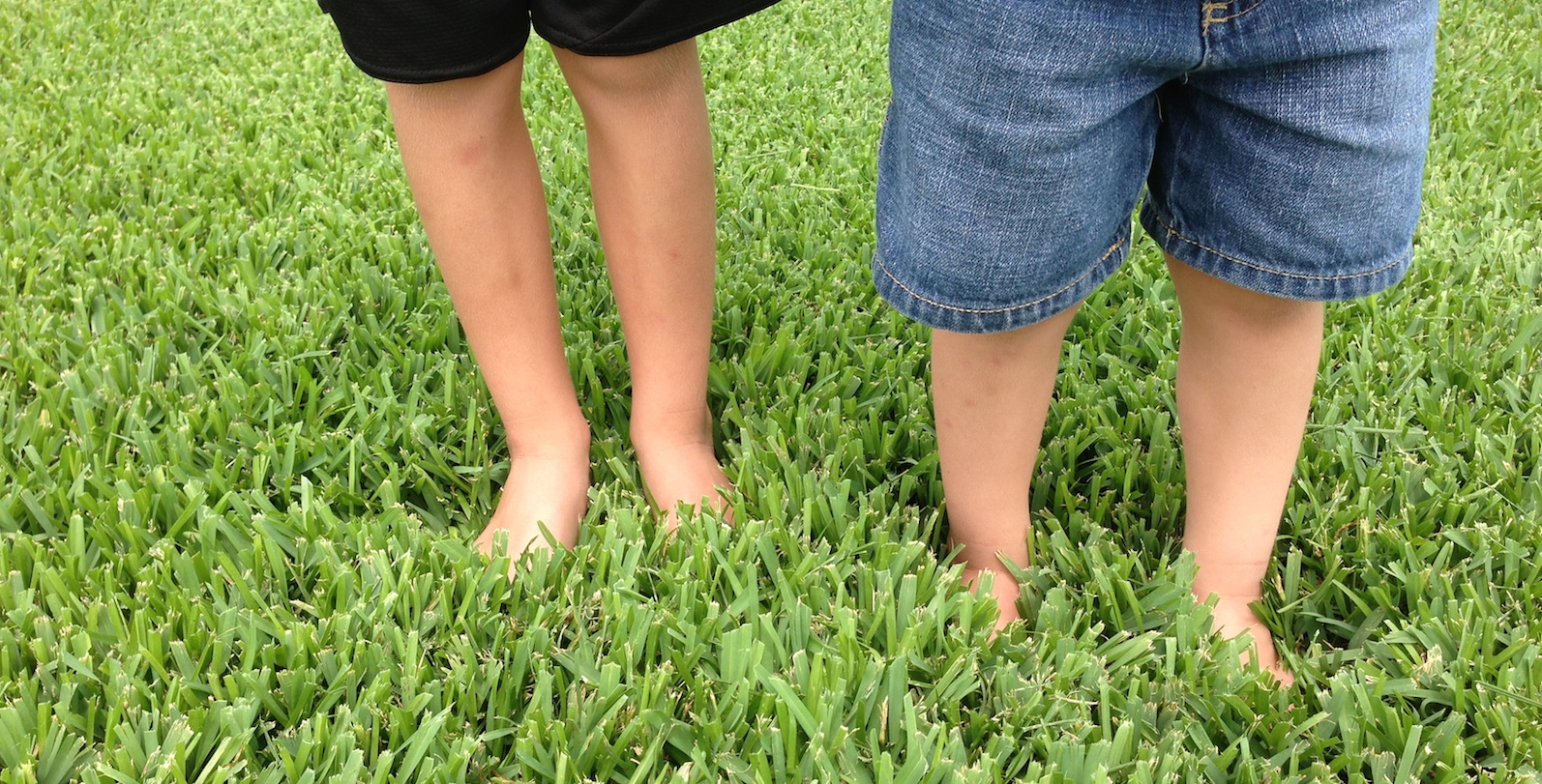 How to Kill Weeds in St  Augustine Grass - Houston Katy