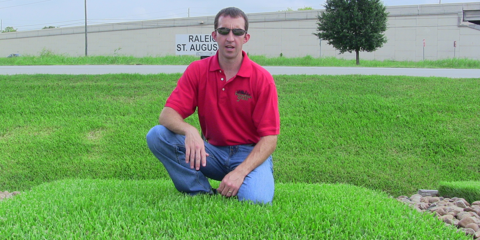 St Augustine Grass Sod Types Pearland Houston Grass