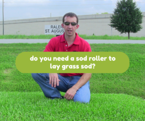 Do you need a sod roller to lay grass sod?