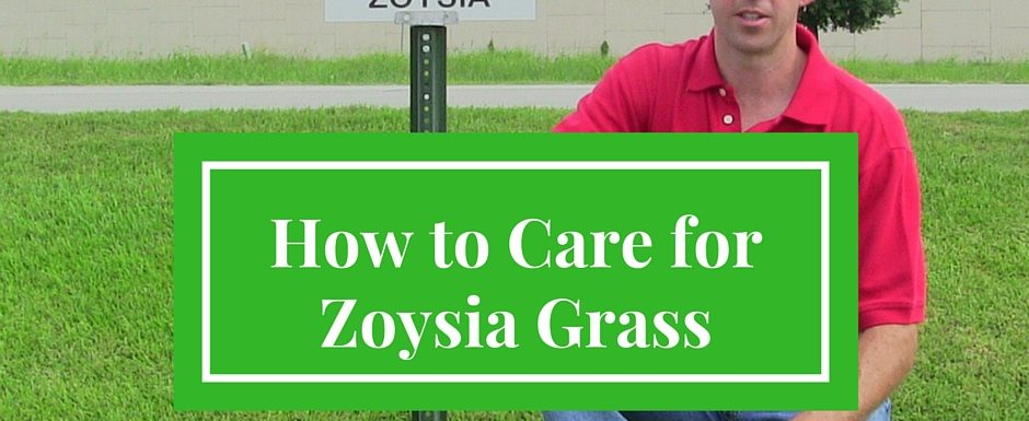 How to Care for Zoysia Grass - Houston Grass South