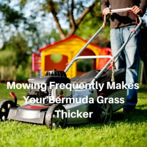 Mowing Frequently Makes Your Bermuda Grass Thicker